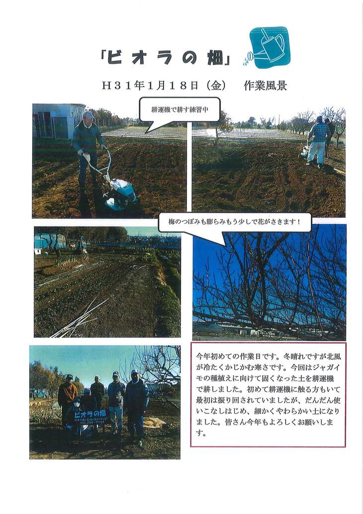 ビオラの畑 118.jpg